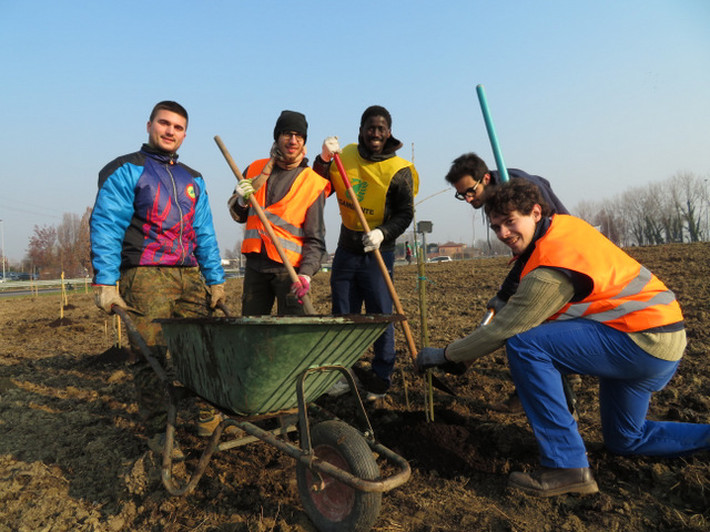Faenza, una trentina di volontari hanno piantato il bosco nella rotatoria del casello autostradale