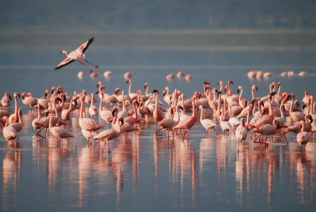 La Pink Week a Ravenna: rosa come l'alba, il tramonto e i fenicotteri