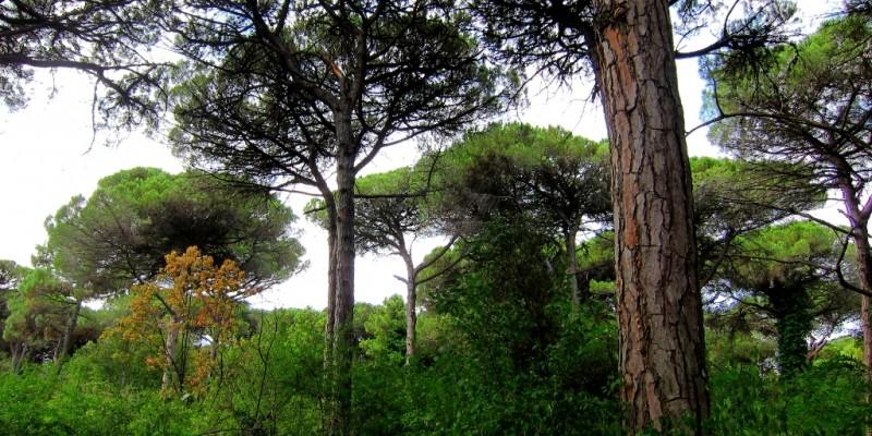 Sempre più vicino il progetto per la Pineta di Milano Marittima