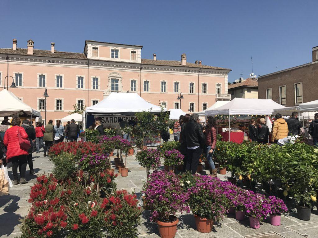 Ravenna in fiore: maggio mese delle rose